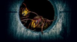 HiddenWasp Malware Stings Targeted Linux Systems