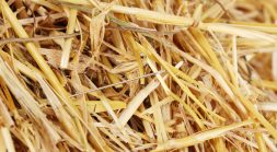 A Straw-by-Straw Analysis: The Zero-Trust Approach for your Alert Haystack